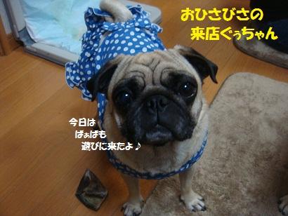 DSC09299_20121122094334.jpg
