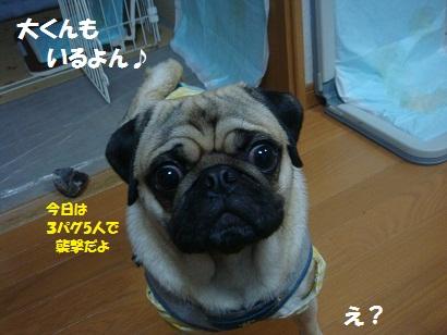 DSC09300_20121122094334.jpg