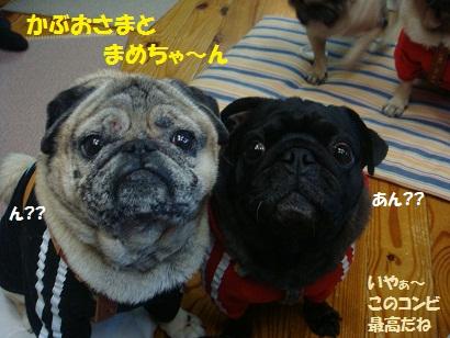 DSC09467_20120821193956.jpg