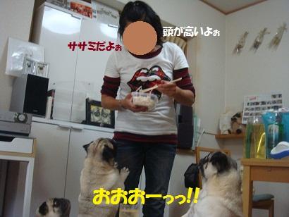 DSC09521_20121130030703.jpg