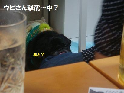 DSC09617_20121201030650.jpg