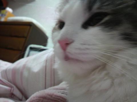 CAT9MH7K.jpg