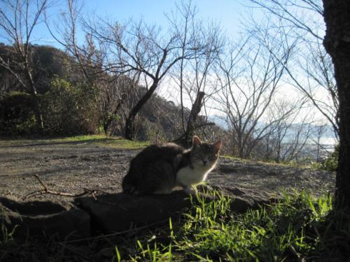 香貫山の猫