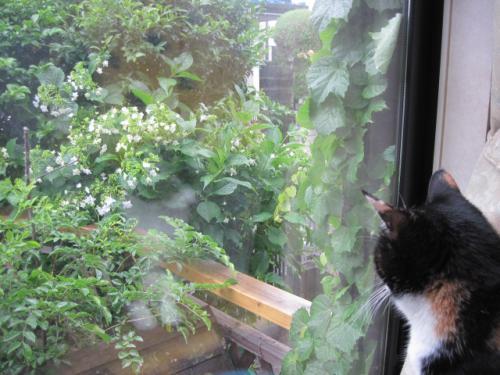 6月6日に雨ザーザー降ってきて♪