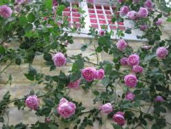 キャス・キッドソンの秘密の庭