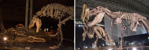 骨格標本展示
