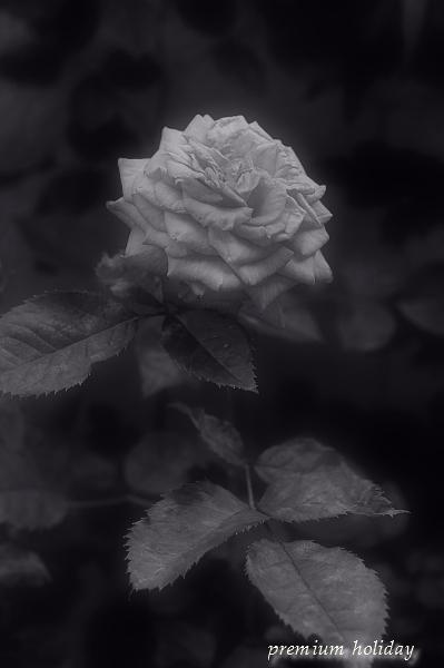 plum0534_f.jpg