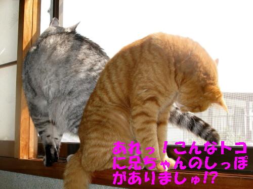 booako_201304081455.jpg