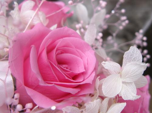 flower_201304071527.jpg