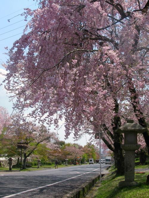 sakamoto_201304121019.jpg