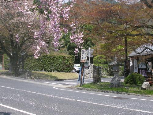 sakamoto_201304121022.jpg