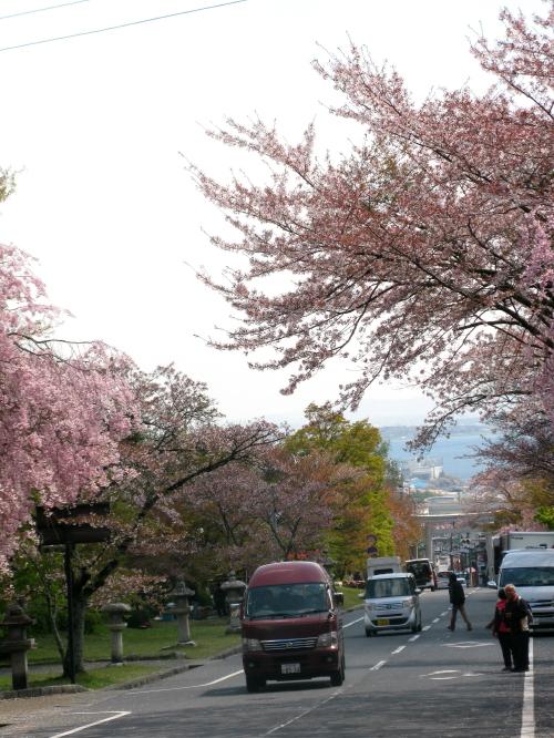 sakamoto_201304121036.jpg