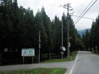中村の大杉