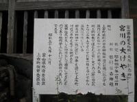 宮川の大ケヤキ