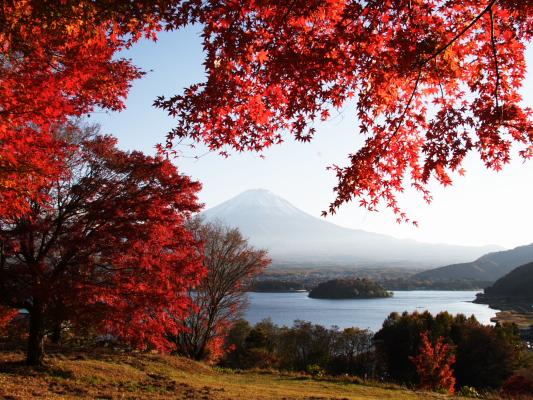 紅葉 富士