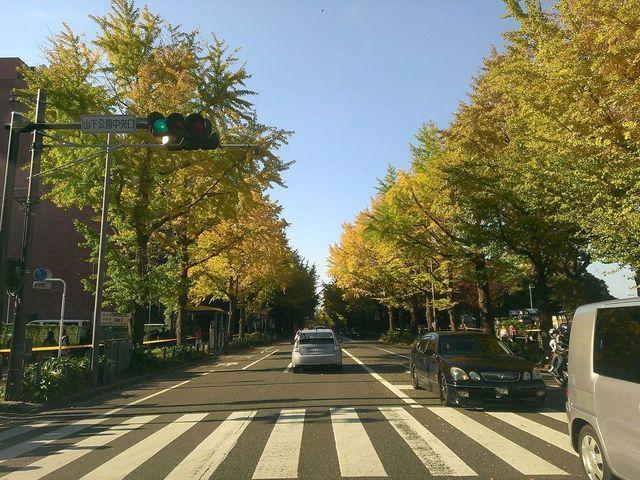 山下公園紅葉