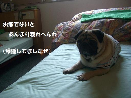 CIMG6791.jpg