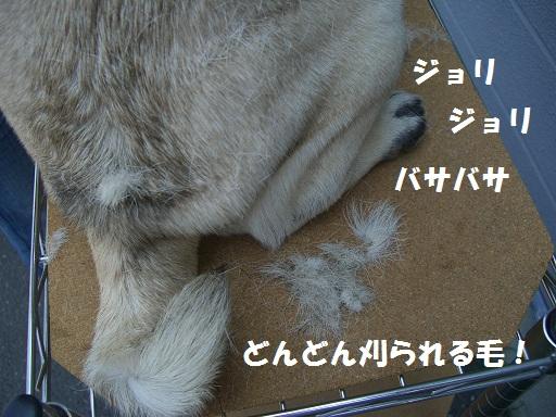CIMG6897.jpg