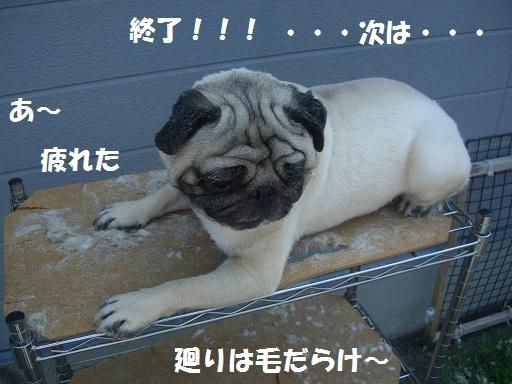 CIMG6909.jpg