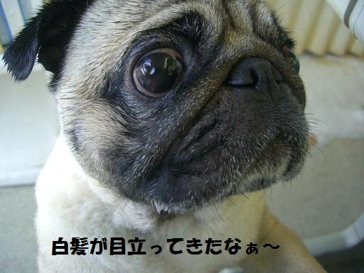 CIMG6919.jpg