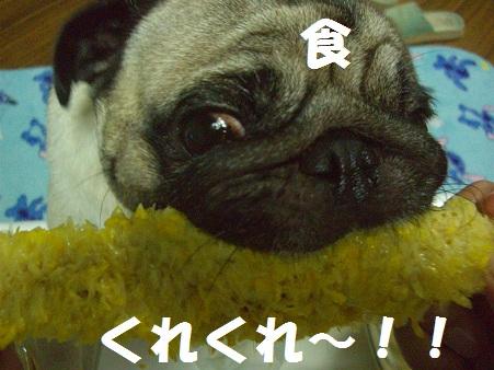 CIMG7339.jpg