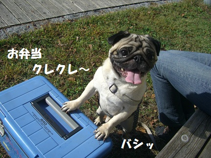CIMG7710.jpg
