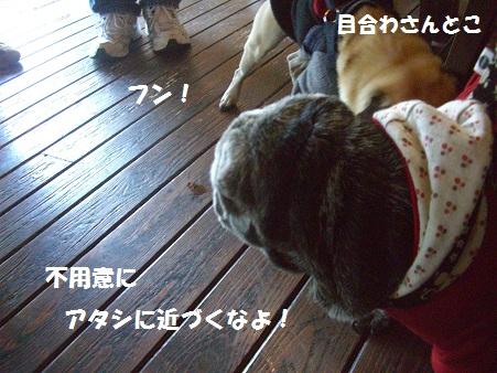 CIMG8149.jpg