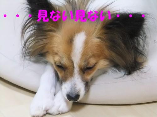 10_20121116091804.jpg