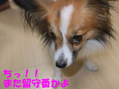 11_20121023225126.jpg