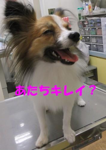 14_20121114101443.jpg