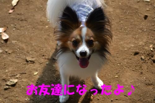 15_20121003222958.jpg