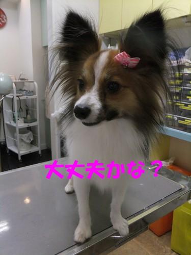 15_20121114101454.jpg