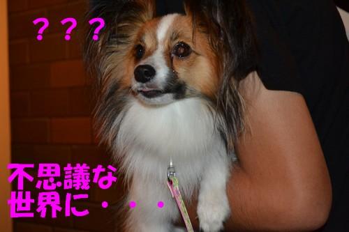 17_20120919111530.jpg