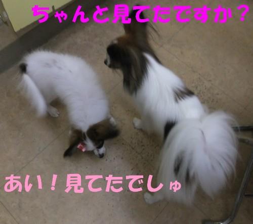 17_20121114101516.jpg