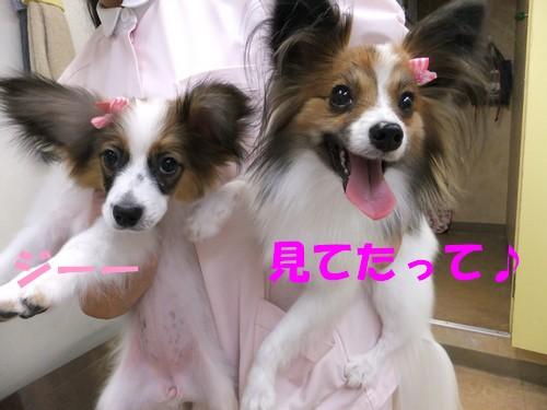 18_20121114101531.jpg