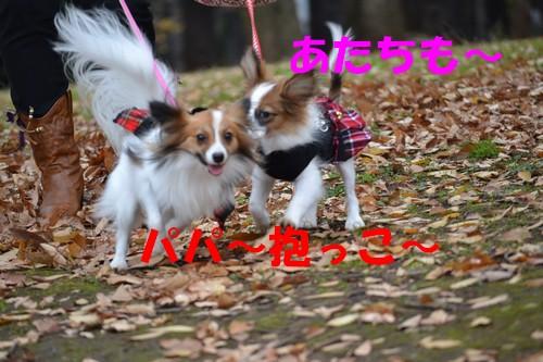 19_20121216100131.jpg