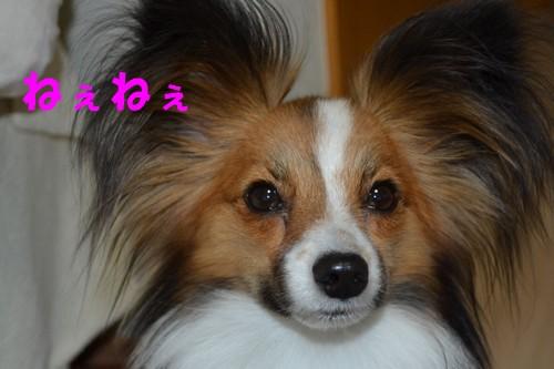 1_20120830213518.jpg