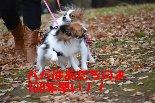 20_20121216100146.jpg