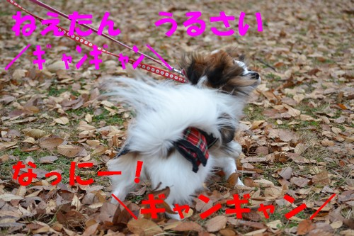 22_20121216100221.jpg