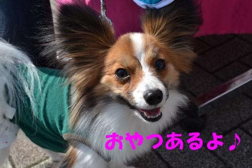 2_20120508221812.jpg