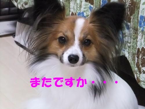 2_20121116091700.jpg
