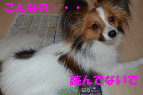 3_20120830213840.jpg