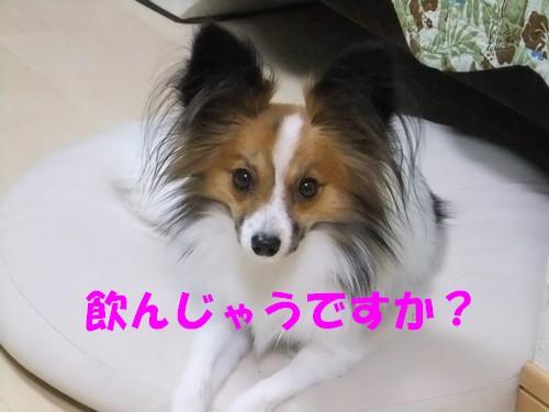 3_20121116091709.jpg
