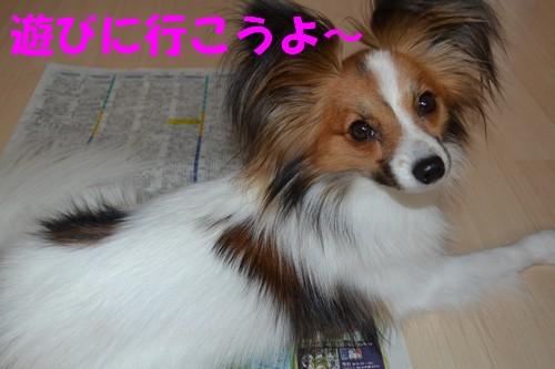 4_20120830213550.jpg