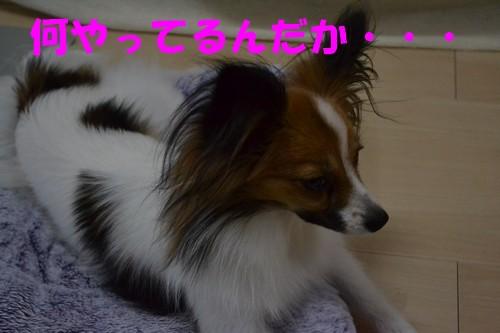 5_20121001015553.jpg