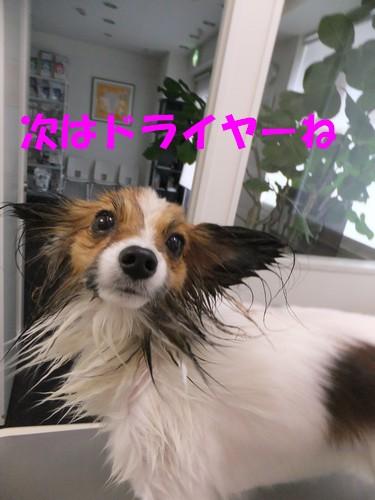 5_20121113085506.jpg