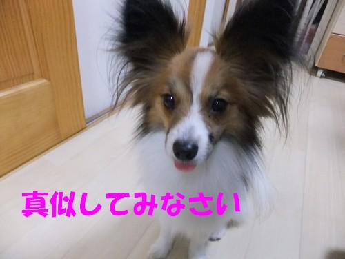 5_20130113201937.jpg