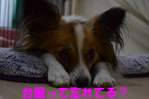 6_20121001015602.jpg