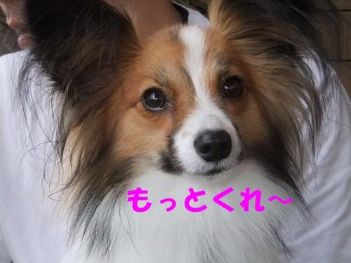 7_20120927184356.jpg