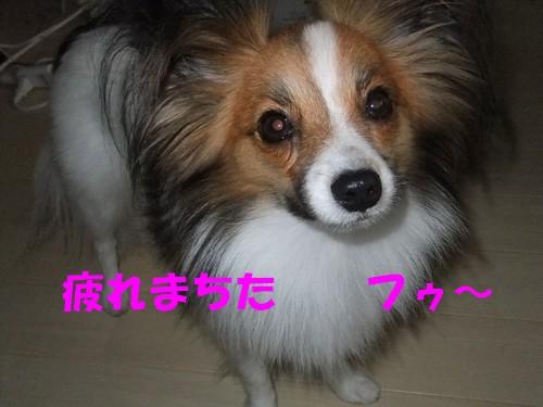 7_20121010105118.jpg